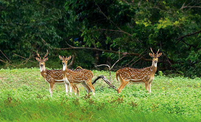 High Court orders judicial probe into poaching of 22 Sundarbans deer