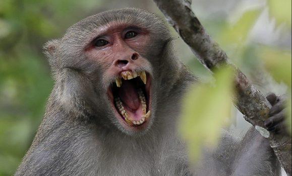 Monkey kills baby boy in India's Agra