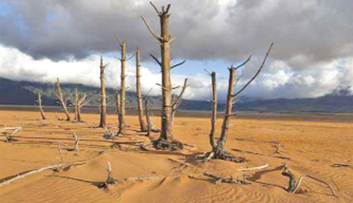 Drought-hit Cape Town should cut down 'alien' trees: Study