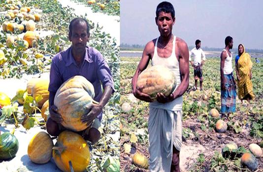 Pumpkin farming changes fortune of 25,000 char families