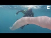 Video shows diver's encounter with mysterious 26-foot sea creature (Watch)