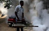 Global fight against malaria has stalled, WHO warns