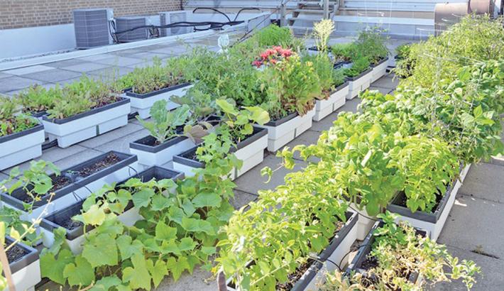 Emerging alternatives to land vegetation