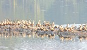Migratory birds mesmerise  visitors at JU campus
