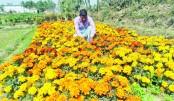 Bogura growers attain financial solvency thru flower farming