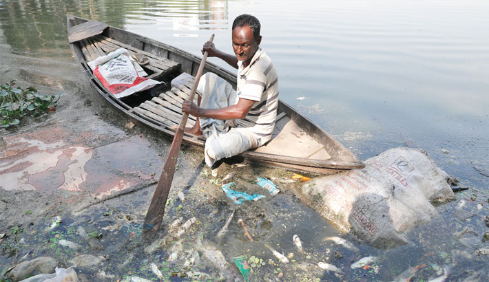 Dying fishes afloat in Gulshan Lake