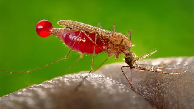 Researchers explore new way of killing malaria in the liver