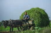 Egypt's fertile Nile Delta threatened by climate change
