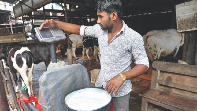 World Bank approves $500mn to boost livestock, dairy production in Bangladesh