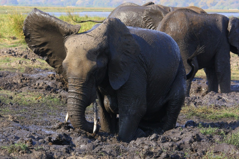 Strange disease kills 8 elephants in northern Tanzania