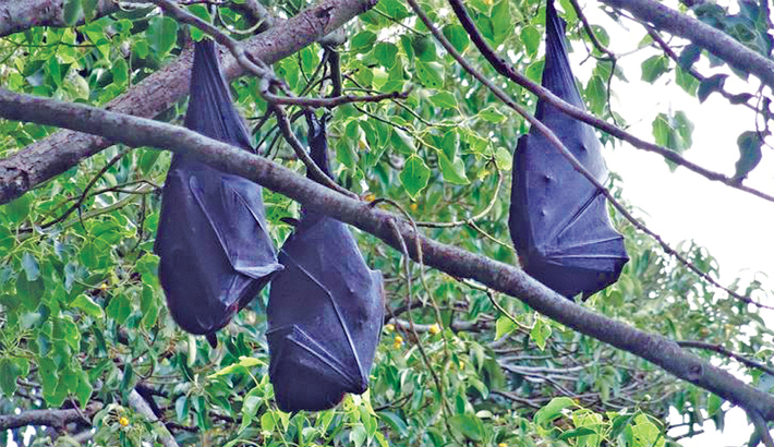Thousands of bats drop dead due to heatwave
