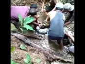 Video of Indonesian man dangerously wrestling with giant python goes viral