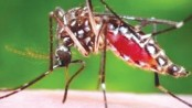 Mosquito menace turns severe in city