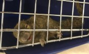 Australia seizes squirrels 'smuggled on plane from Bali'
