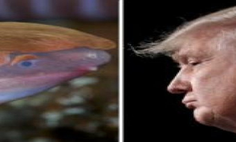 Amphibian that buries head in sand named after Donald Trump
