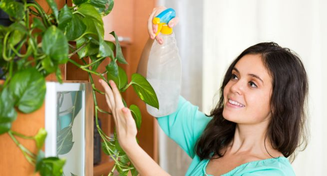 This plant will give clean indoor air by removing pollutants inside house