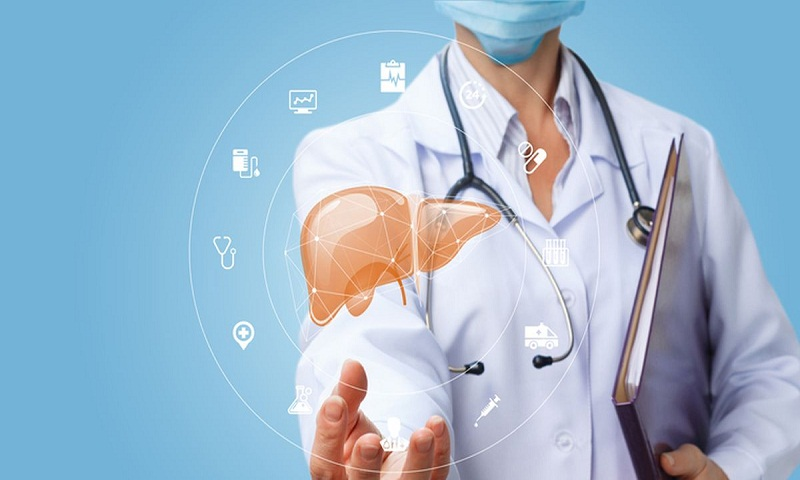 Take care of your liver, the metabolic factory of your body