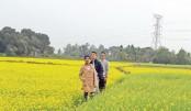 Bumper mustard yield expected in Manikganj