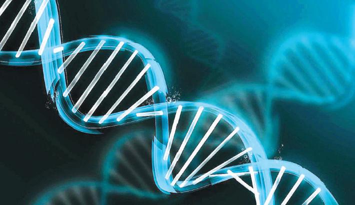 DNA: The  Inborn Identity