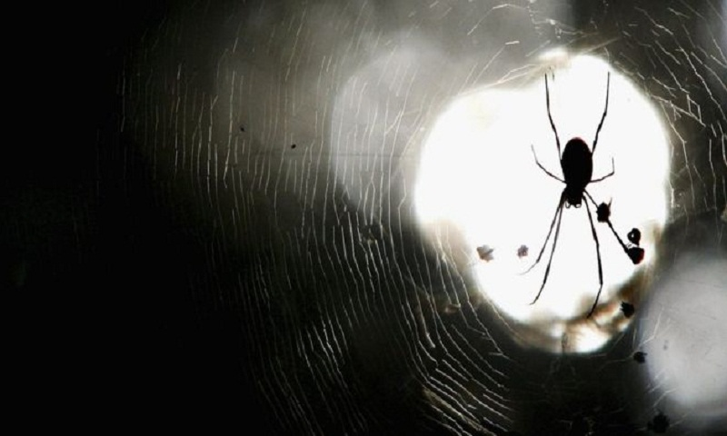 Australian police respond to spider death threats