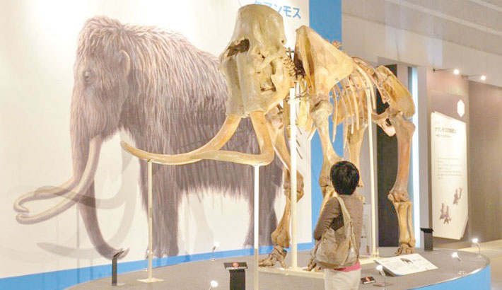 Mammoth DNA found in Cambodia market items