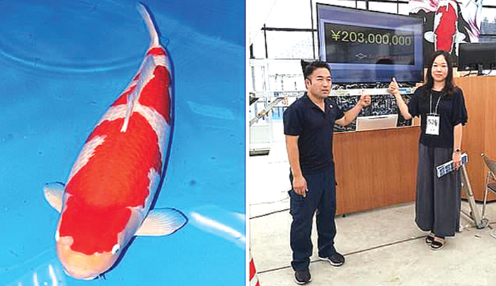 World's most expensive fish