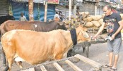 Delhi cows and elderly  to moo-ve in together