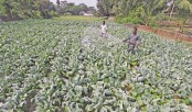 Vegetable farming growing rapidly