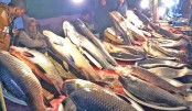Traditional fish fair begins  in Moulvibazar
