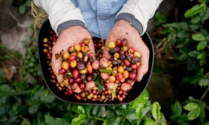 World's coffee under threat, say experts