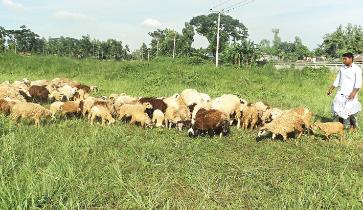 Sheep are grazing in a field