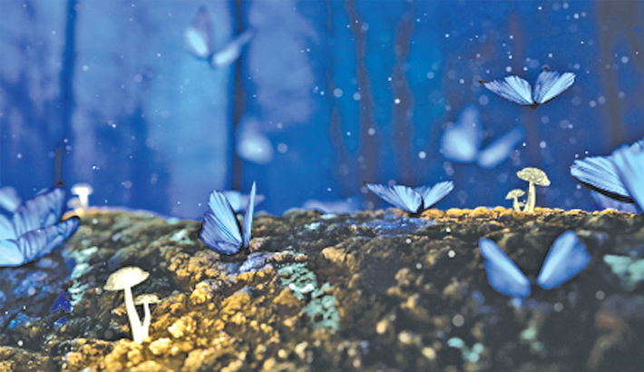 A tale of butterflies, tornadoes  and a chaotic world