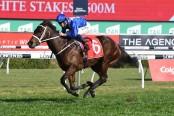 Horse named 'Australian of the Year'