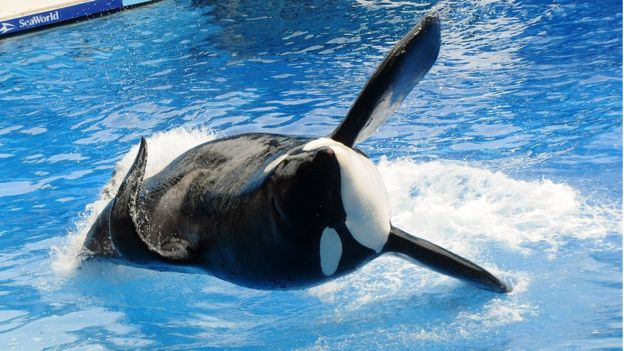 Orca at SeaWorld Orlando dies suddenly
