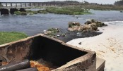 Save rivers, recognise them as living being: Green activists