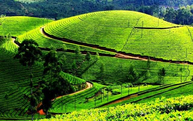 10 scenic tourist places In Darjeeling