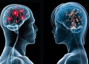 Women's brains appear younger than men's: study
