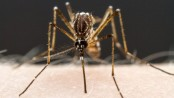 Mosquitoes 'put off biting' by human diet drugs
