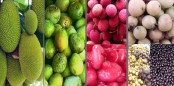 4.50 lakh tonnes fruits produced in Rangpur region