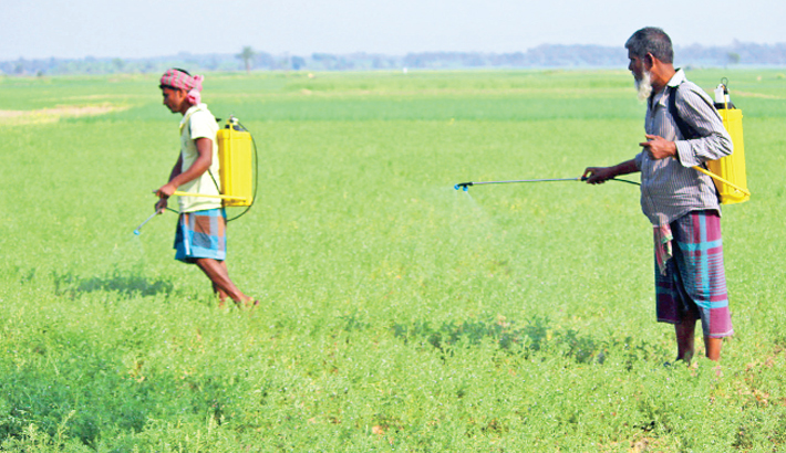 Farmers spray pesticide on a vegetable field without wearing masks
