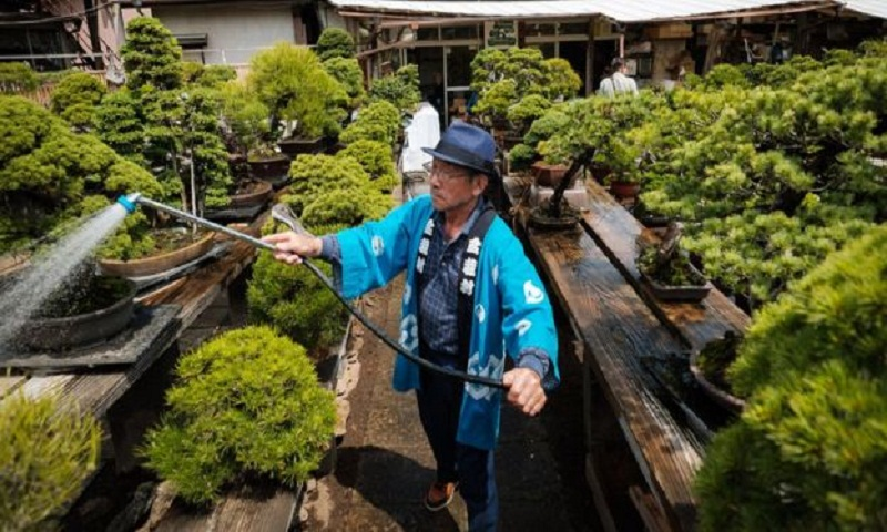 Bonsai theft: Japanese couple robbed of 400-year-old tree