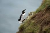 Dutch scientists probing mystery of mass bird deaths