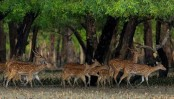 Sundarbans Day waiting for official recognition over 17 years