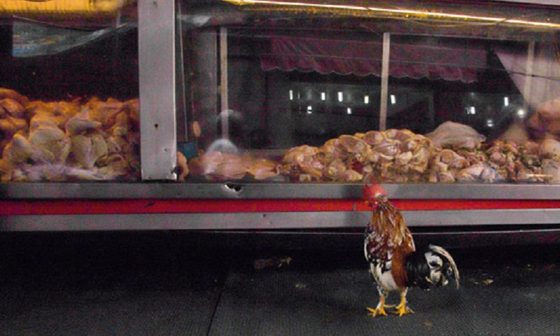 China imposes anti-dumping tariffs on Brazilian chicken