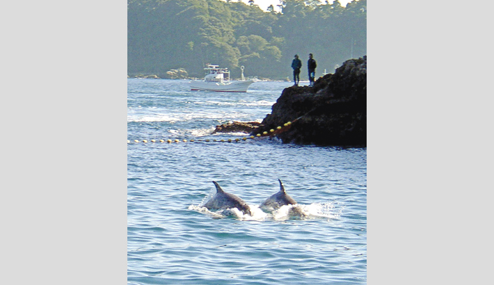 Activists file suit to stop  dolphin hunting in Japan