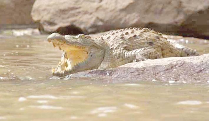 Crocodile mauls Indonesian to death in Malaysia