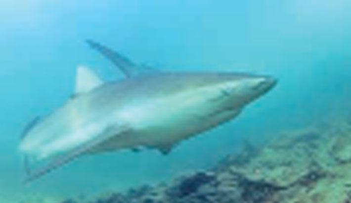Sharks reel in fans in Eastern Mediterranean winter waters