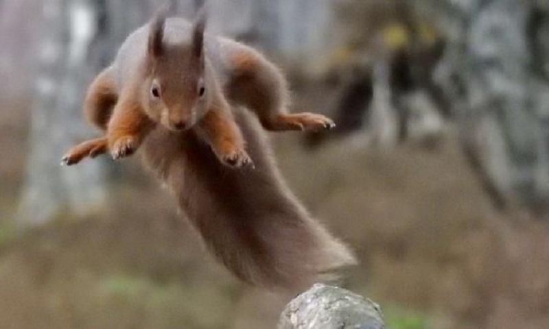 J-Hope: BTS fans 'save' squirrels for K-pop star's birthday