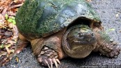 Turtle disaster? 100-pound tortoise missing in New Mexico