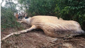 36-foot whale found dead In the Middle of Amazon